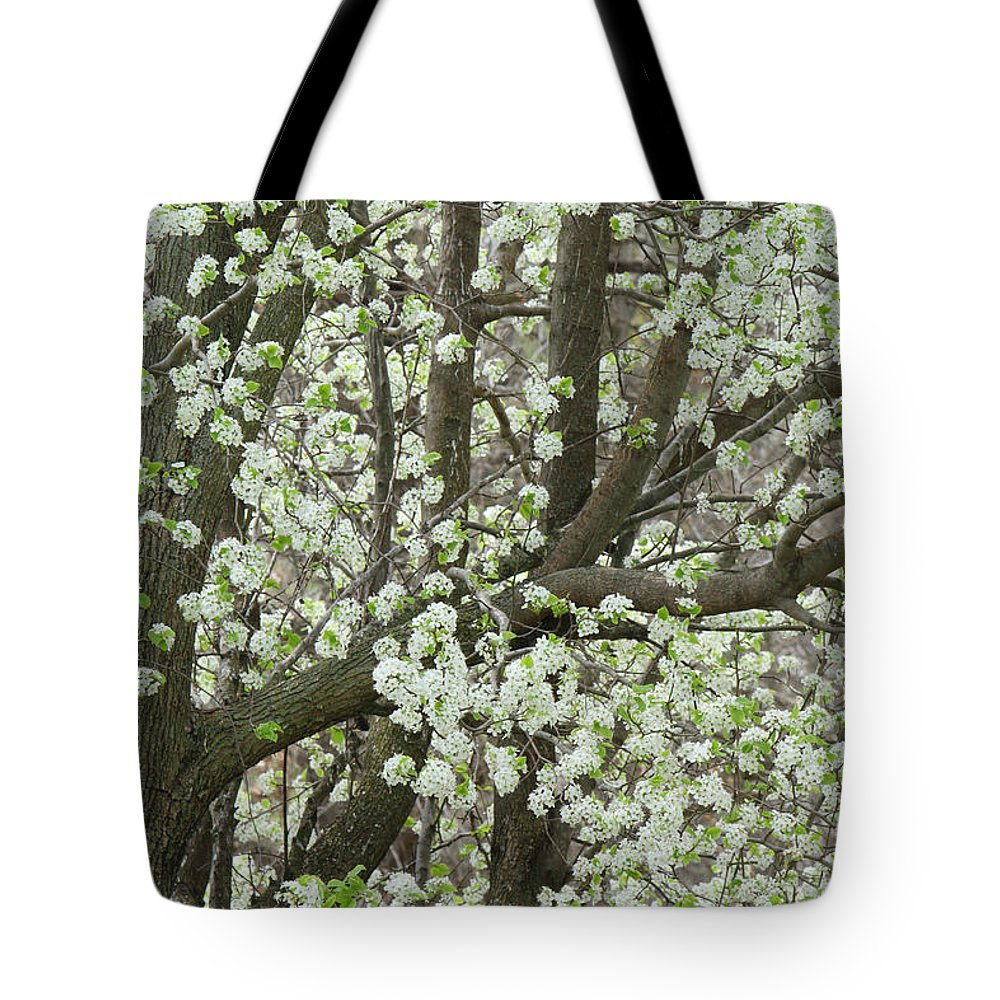 Pear Tree Tote Bag featuring the photograph Oriental Pear Tree by Bonnie Willis
