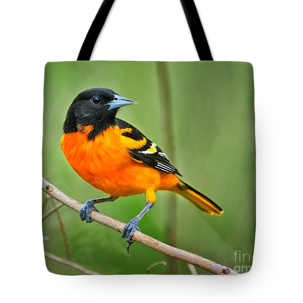 Oriole Tote Bag featuring the photograph Oriole Perched by Timothy Flanigan