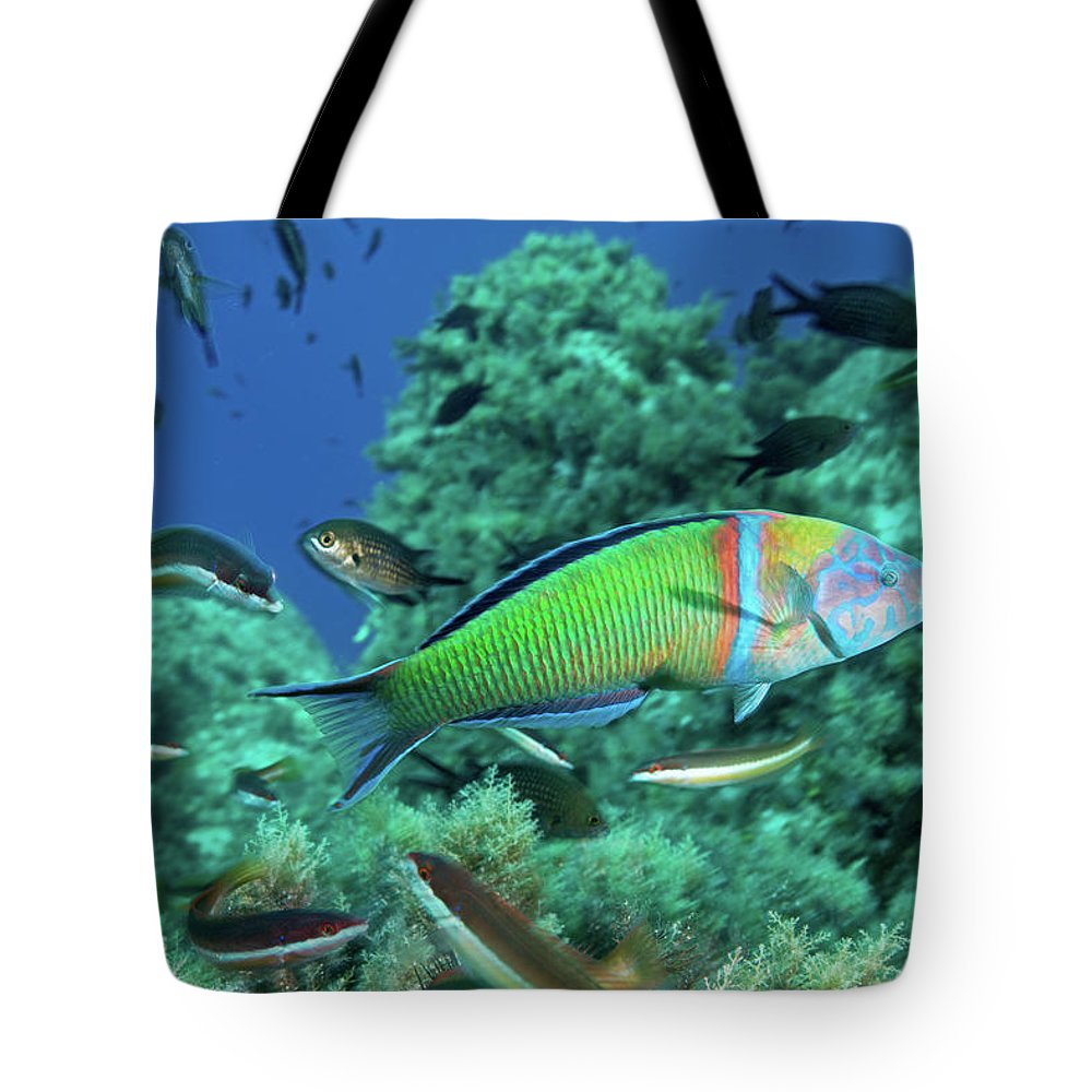 Underwater Tote Bag featuring the photograph Ornate Wrasse by Gerard Soury