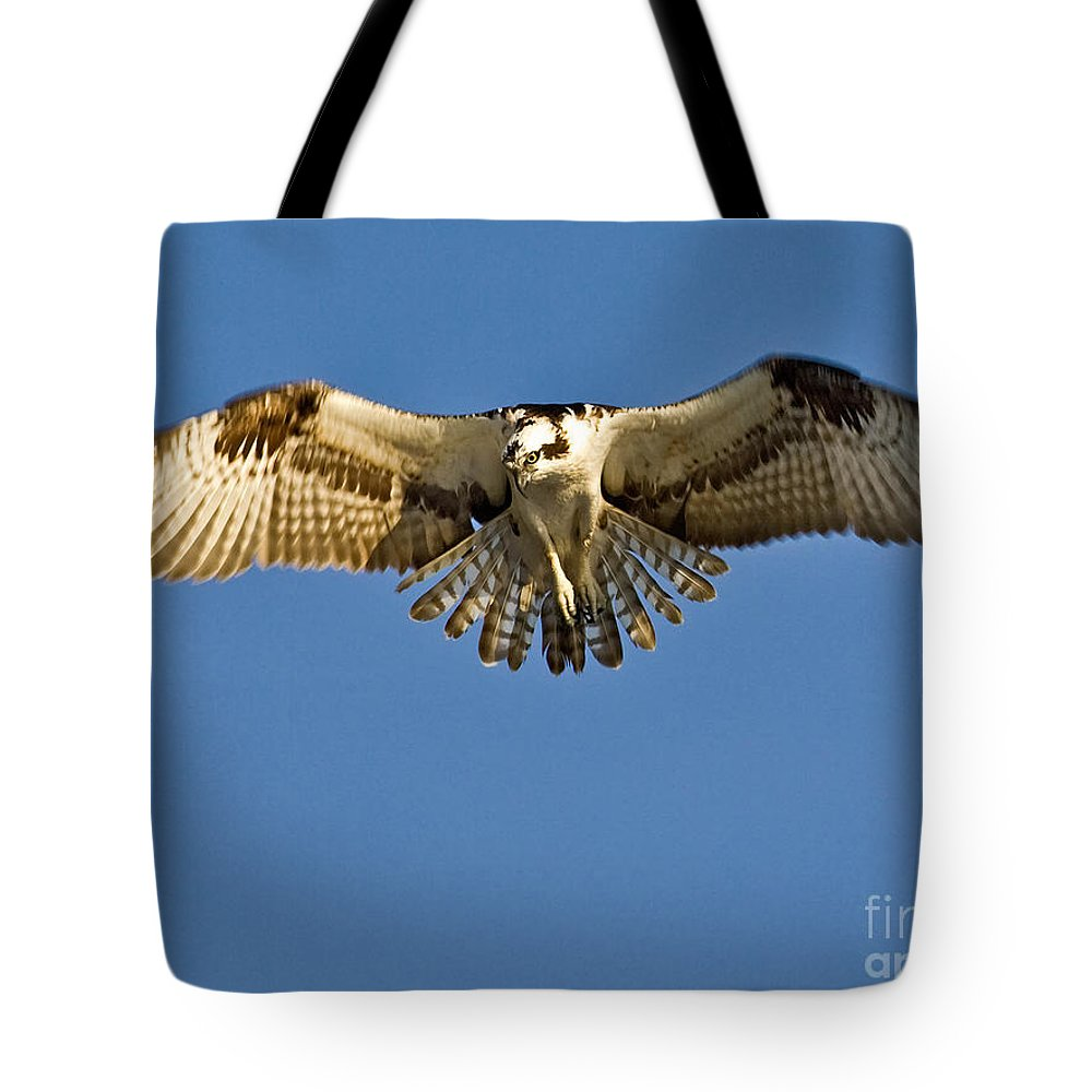 Osprey Tote Bag featuring the photograph Osprey Hovering by Jerry Fornarotto
