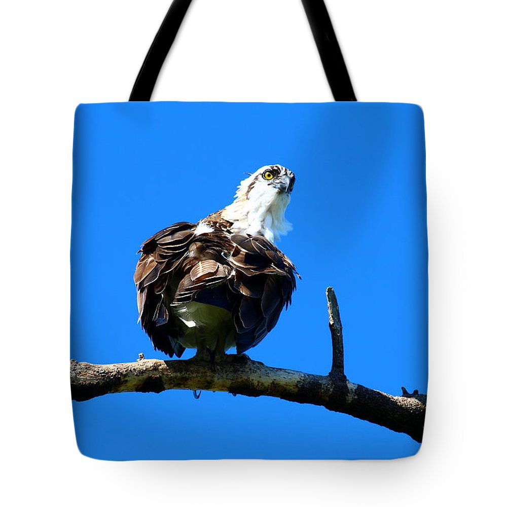Osprey Tote Bag featuring the photograph Osprey On A Branch by Christiane Schulze Art And Photography