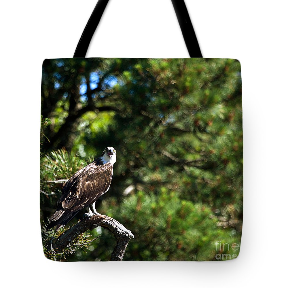 Osprey Talk Tote Bag featuring the photograph Osprey Talk by Michelle Constantine