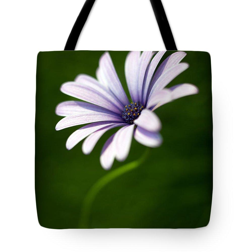 Osteospermum Tote Bag featuring the photograph Osteospermum Daisy by Tony Cordoza