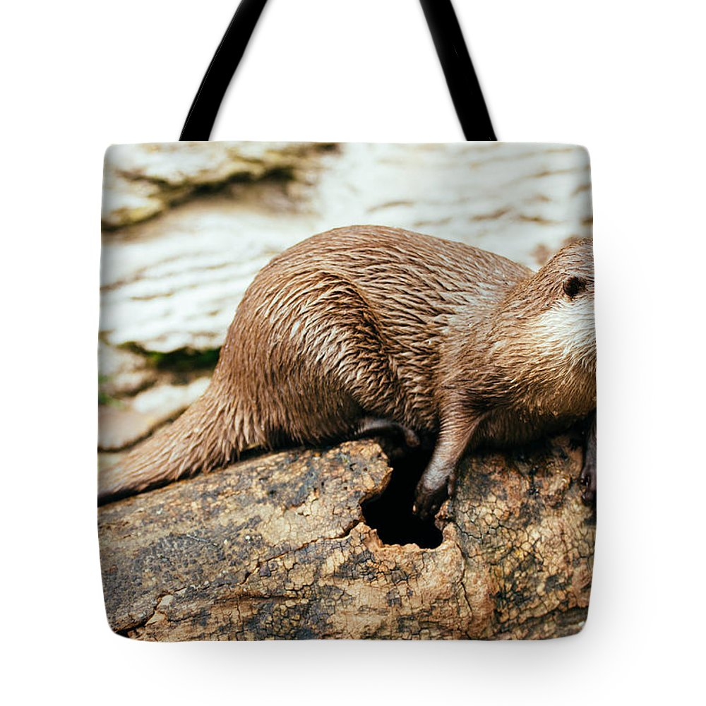 Otter Tote Bag featuring the photograph Otter On A Tree by Pati Photography