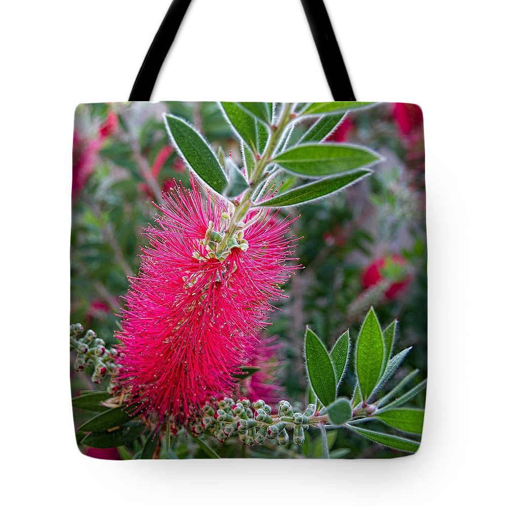Flower Tote Bag featuring the photograph Our Bottlebrush Tree by Tim Stanley