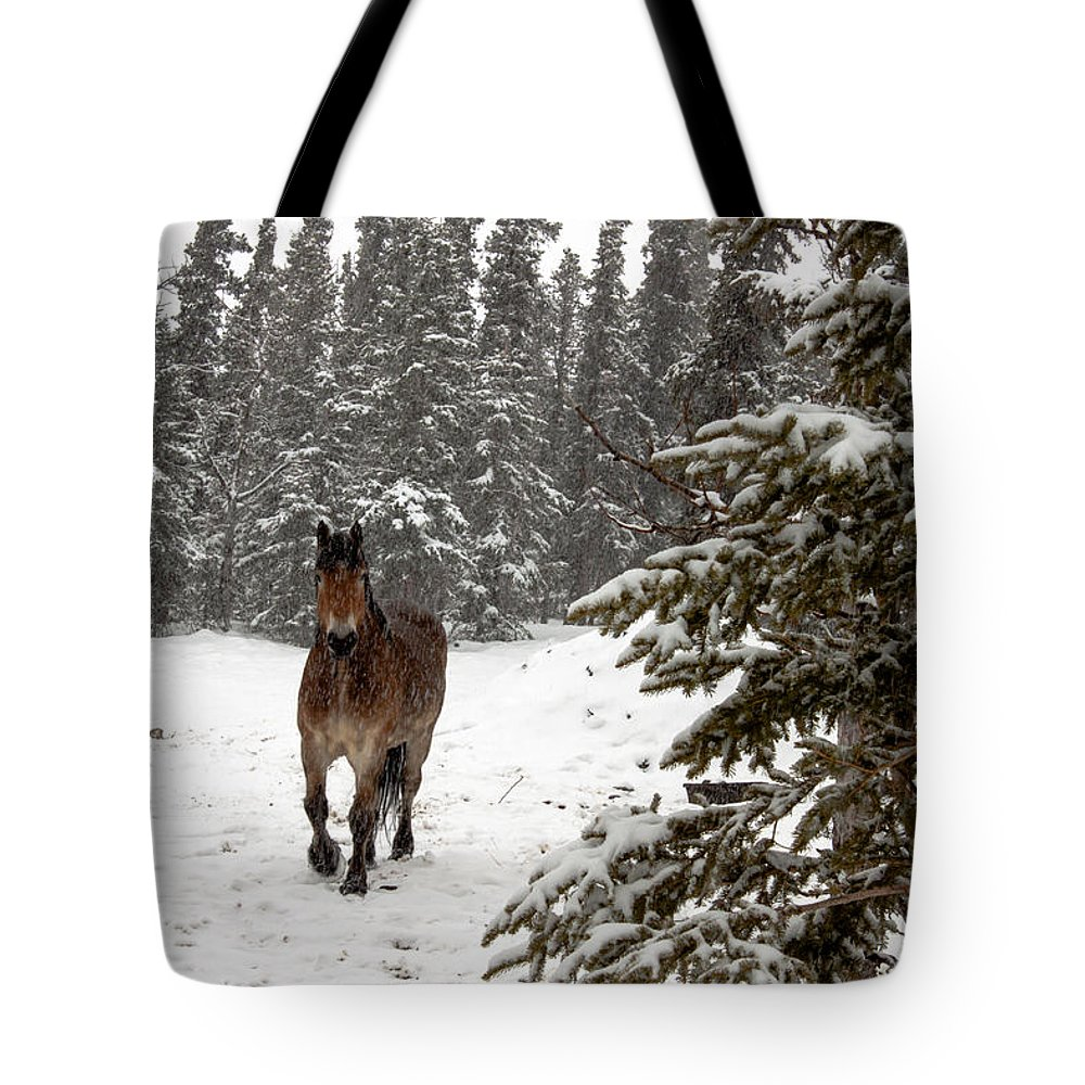 Horse Tote Bag featuring the photograph Out For A Walk by Thomas Sellberg