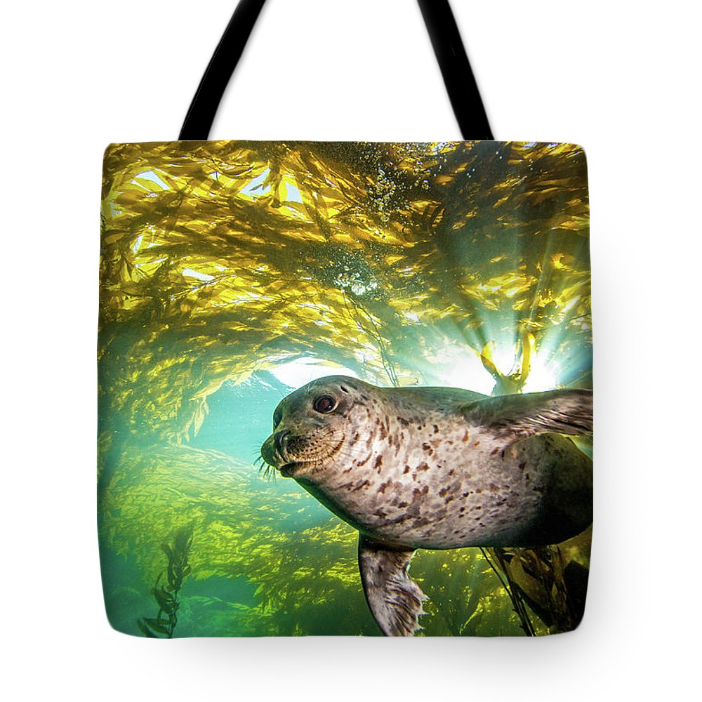 Underwater Tote Bag featuring the photograph Out Of The Sun by Douglas Klug
