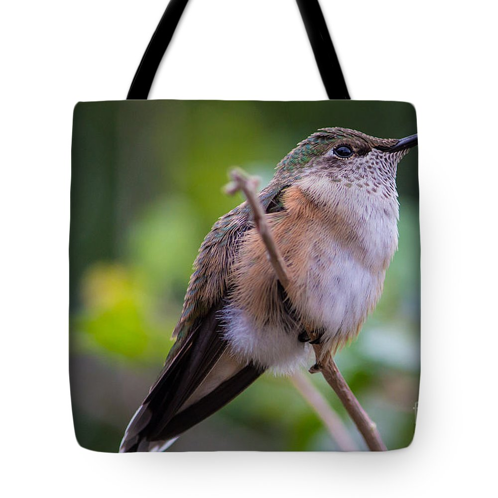 Hummingbird Tote Bag featuring the photograph Out On A Limb by Mary Giordano