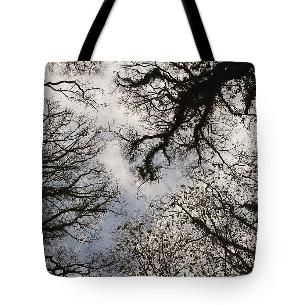 Britain Tote Bag featuring the photograph Overhead Trees In Exmoor, United Kingdom by Heather Elton