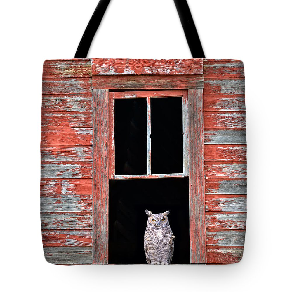 Owl window tote bag for sale by leland d howard for 18x18 window