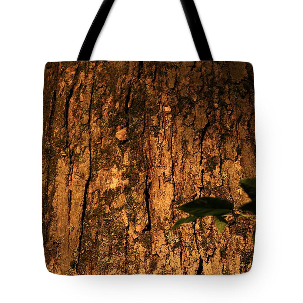 Tree Bark Tote Bag featuring the photograph Pa Bark by Jim Cotton