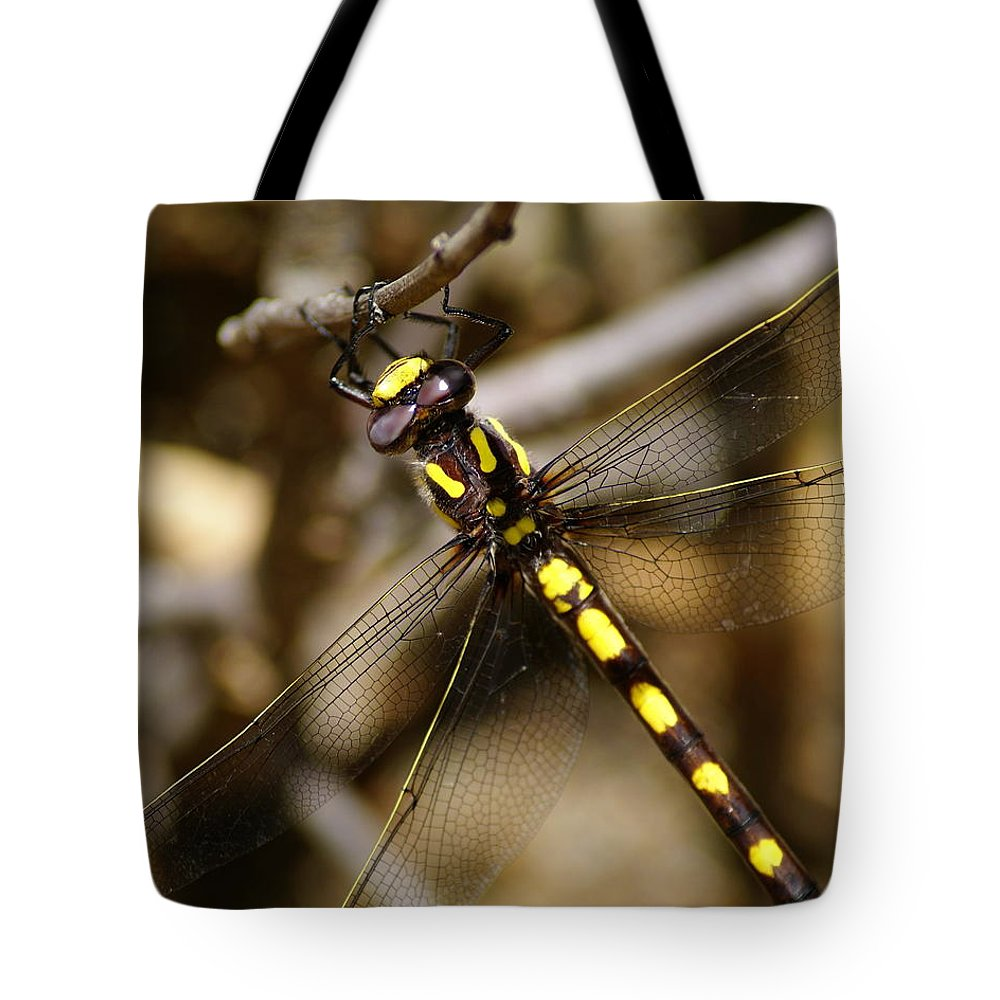 Dragonflies Tote Bag featuring the photograph Pacific Spiketail Dragonfly On Mt Tamalpais 2 by Ben Upham III