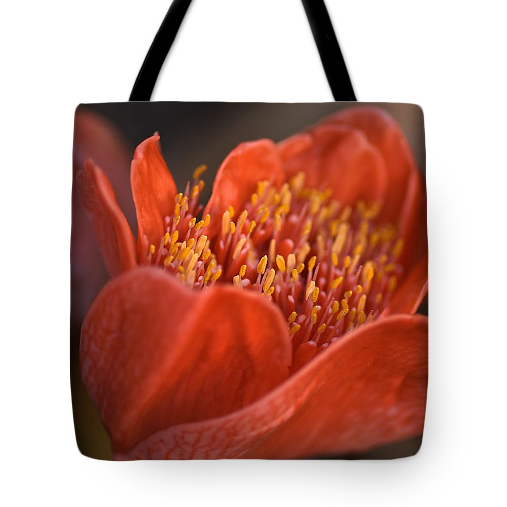 Paintbrush Lily Tote Bag featuring the photograph Paintbrush Lily by Joy Watson