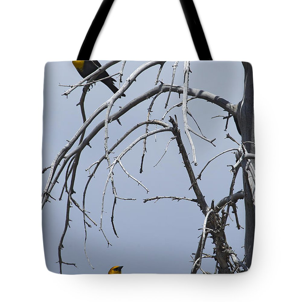 Blackbird Tote Bag featuring the photograph Pair Of Male Yellow-headed Blackbird  #9521 by J L Woody Wooden