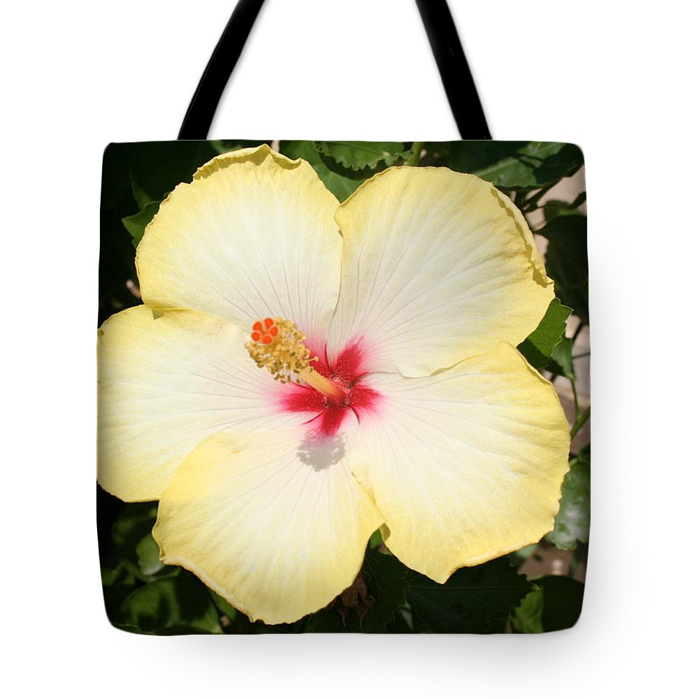 Pale yellow hibiscus flower front view tote bag for sale by tracey hibiscus tote bag featuring the photograph pale yellow hibiscus flower front view by tracey harrington izmirmasajfo