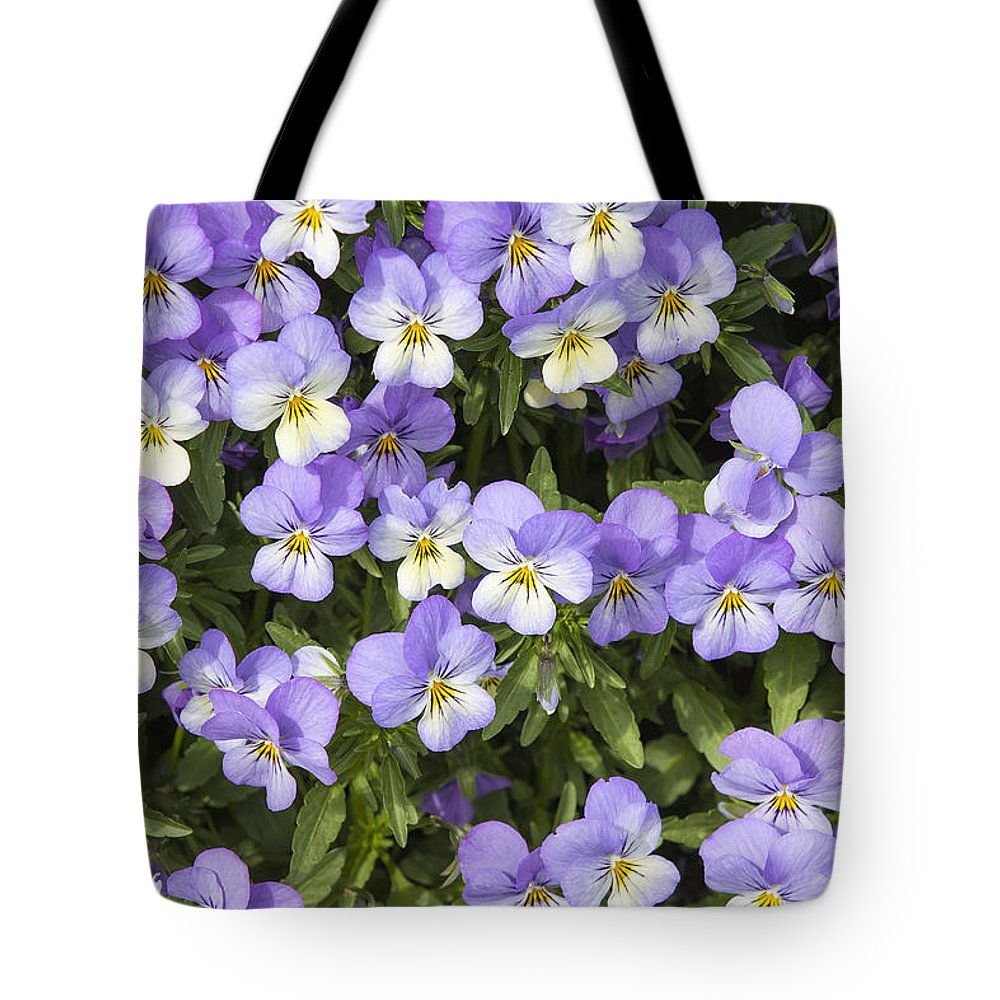 Pansy Tote Bag featuring the photograph Pansy Flowers In Spring Background by Jit Lim