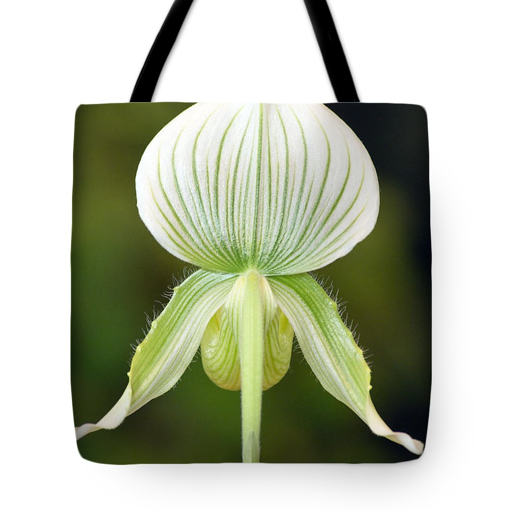 Orchids Tote Bag featuring the photograph Paphiopedilum Maudiae Orchid by Denise Woldring