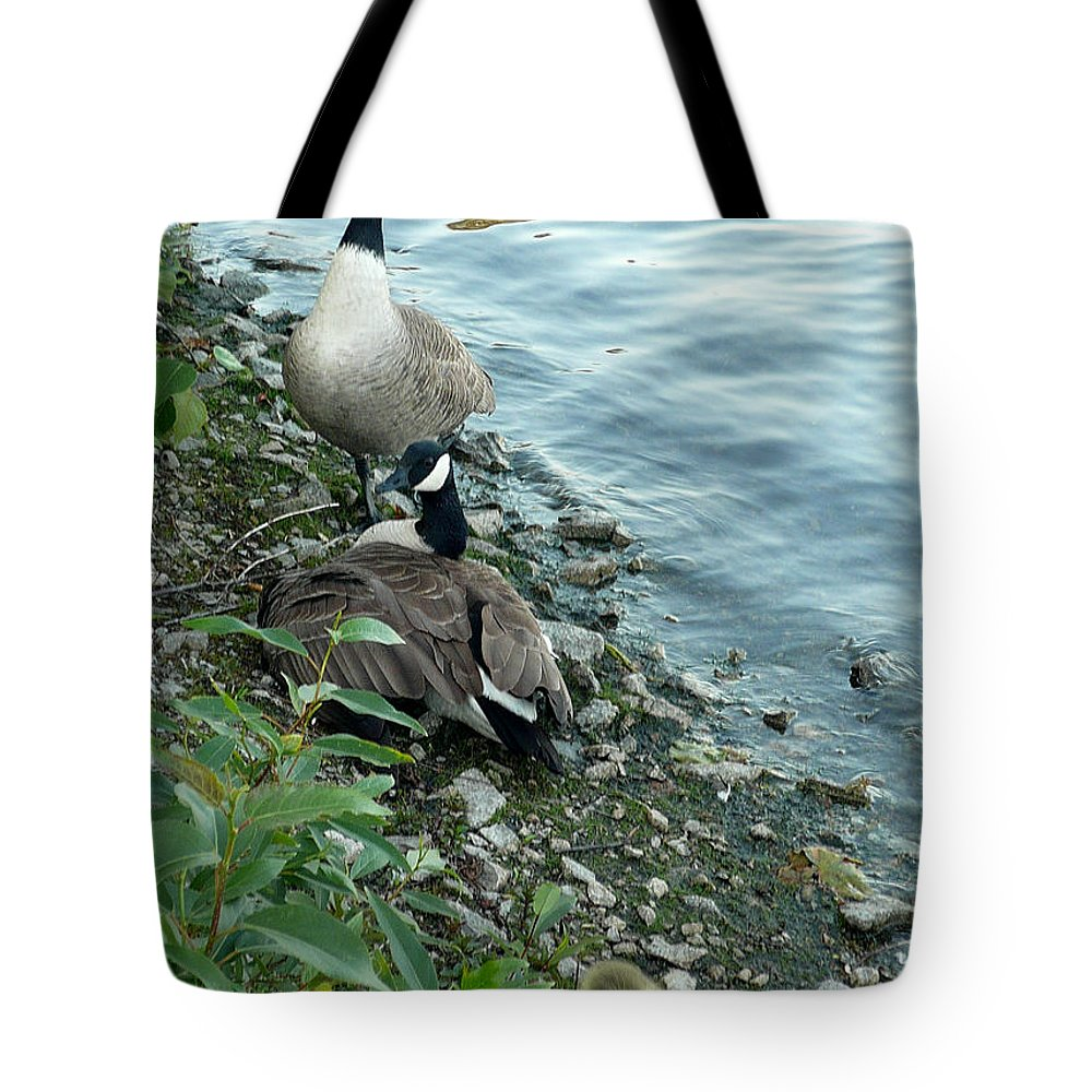 Canadian Geese Tote Bag featuring the photograph Parental Care by Nicki Bennett