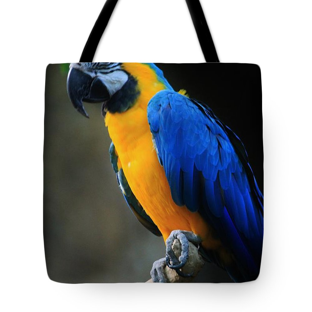 Parrot Tote Bag featuring the photograph Parrot by Tonya Hance