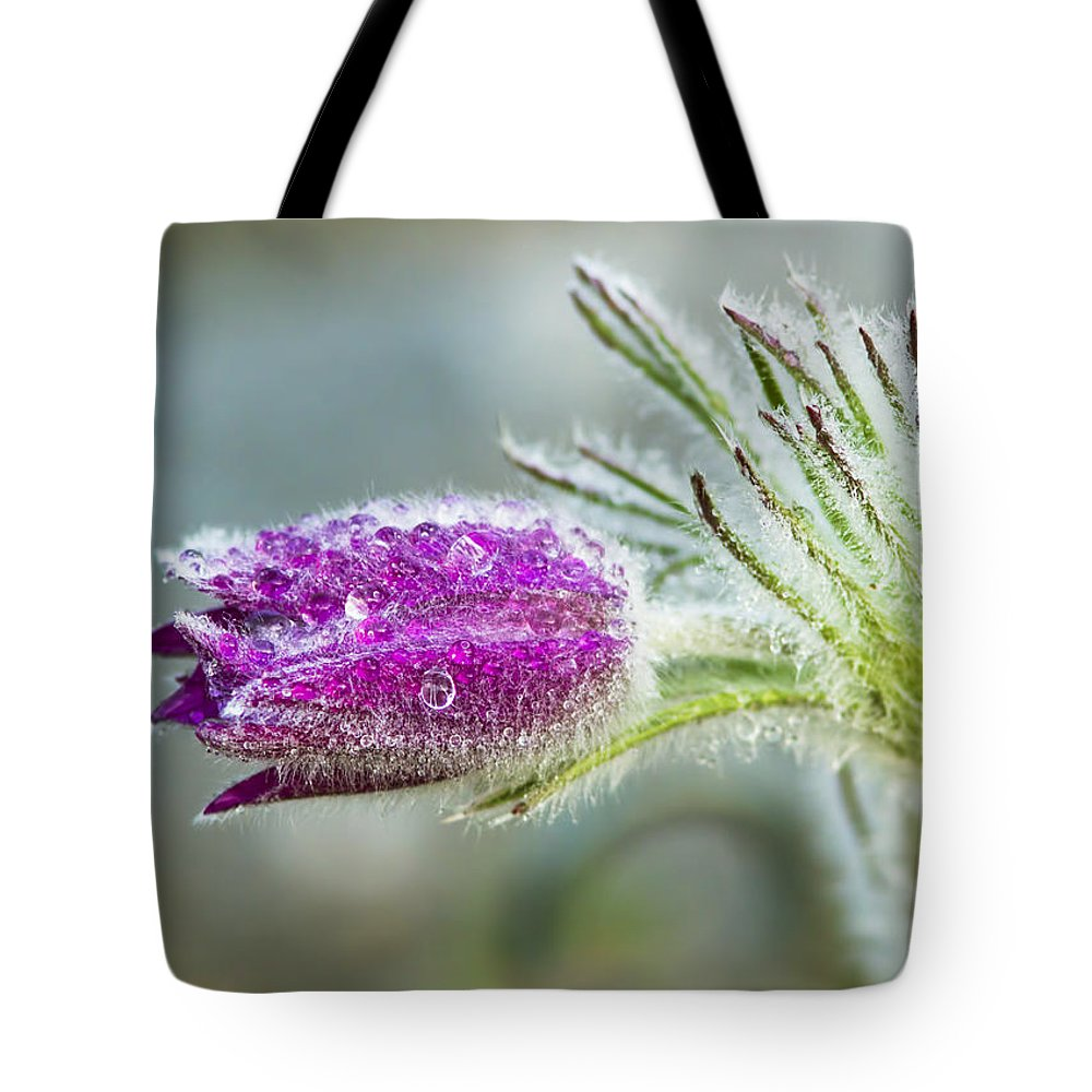 Pasque Tote Bag featuring the photograph Pasque Flower by Mircea Costina Photography