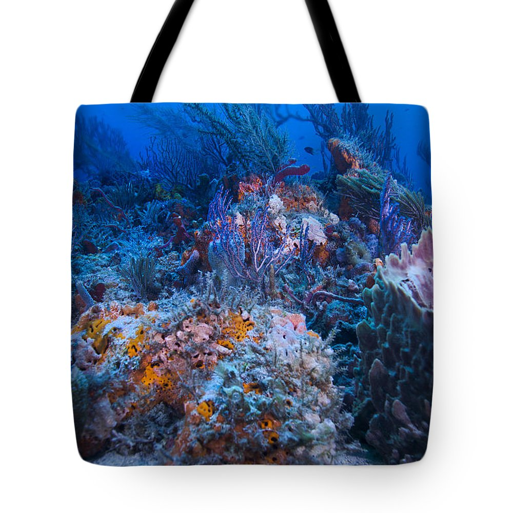 Angle Tote Bag featuring the photograph Pastels by Sandra Edwards