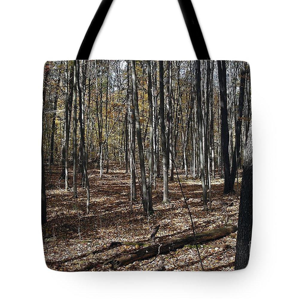 Forest Floor Tote Bag featuring the photograph Path by Joseph Yarbrough