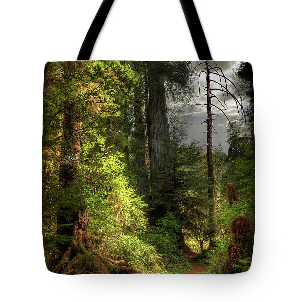 Tranquility Tote Bag featuring the photograph Path Through Redwood Forest by Ed Freeman