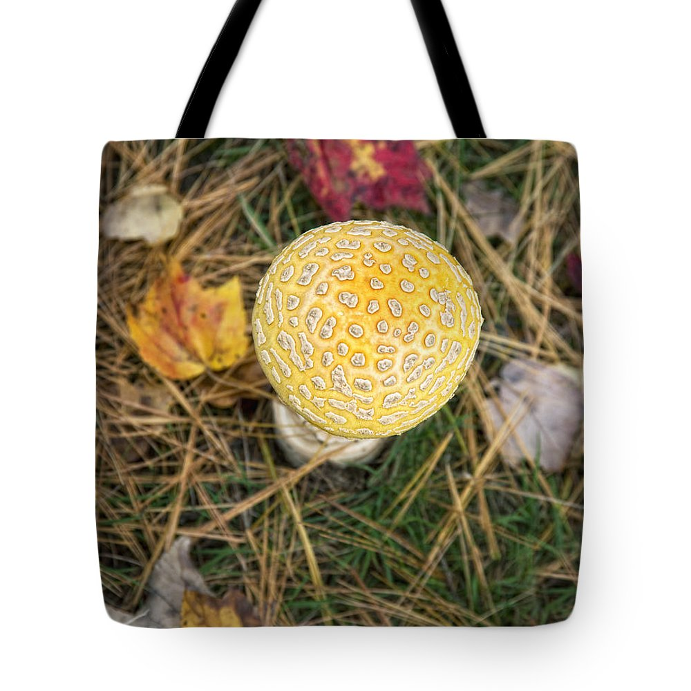 Nature Tote Bag featuring the photograph Patterned by Claudia Kuhn