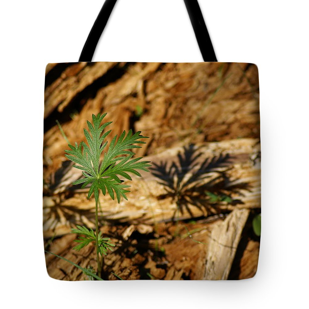 Flowers Tote Bag featuring the photograph Peaceful Shadow In The Woods by Ben Upham III
