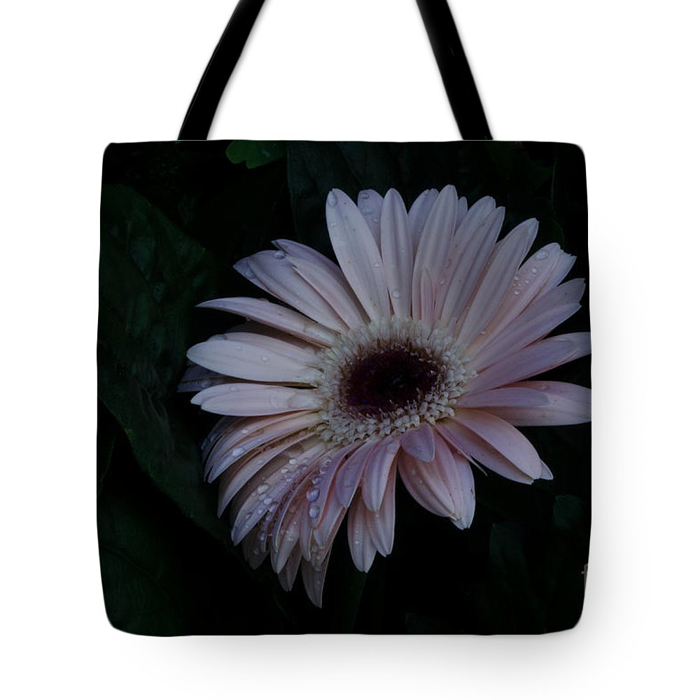 Flower Tote Bag featuring the photograph Peach Gerba Daisy by Donna Brown