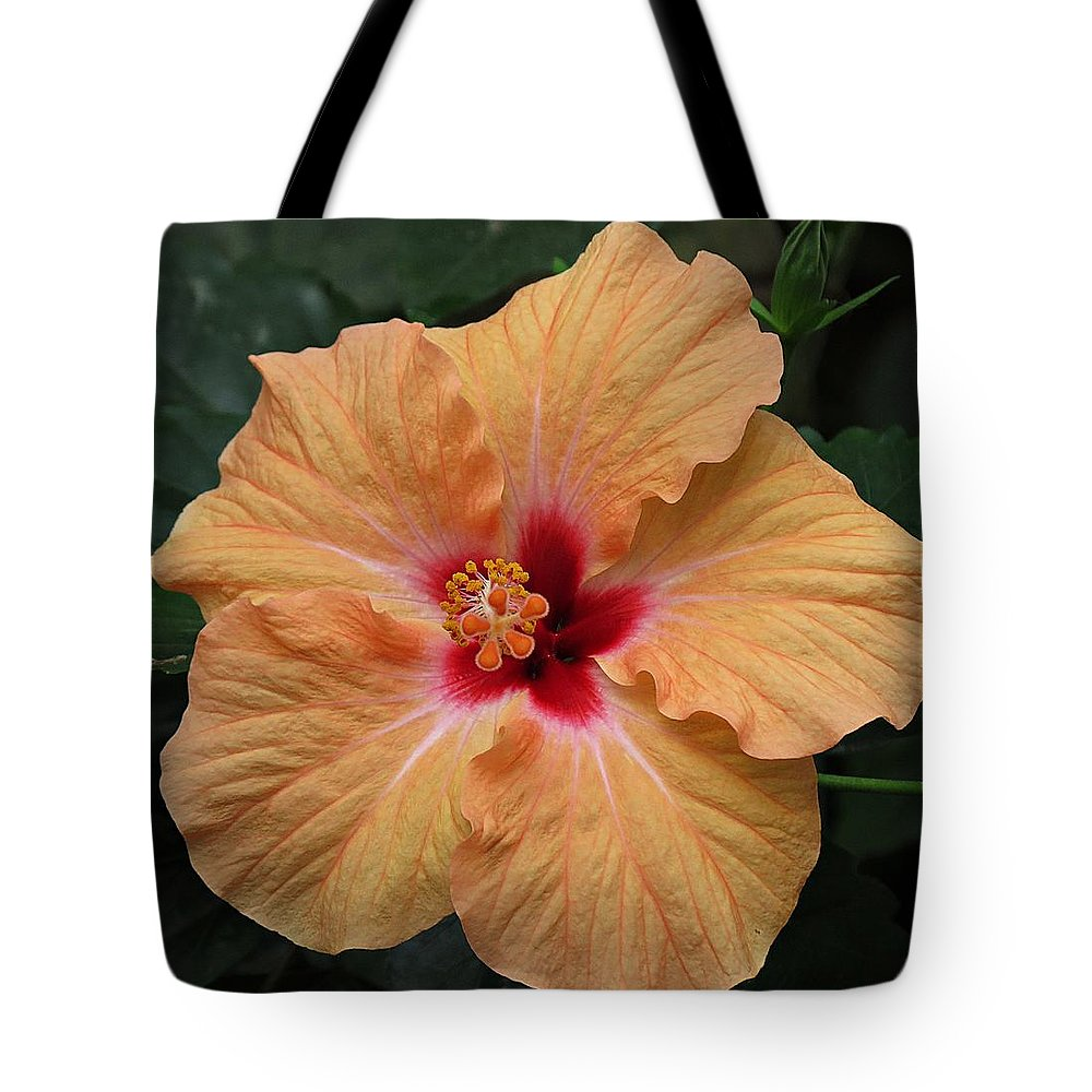 Peach hibiscus flower tote bag for sale by mtbobbins photography flower tote bag featuring the photograph peach hibiscus flower by mtbobbins photography izmirmasajfo