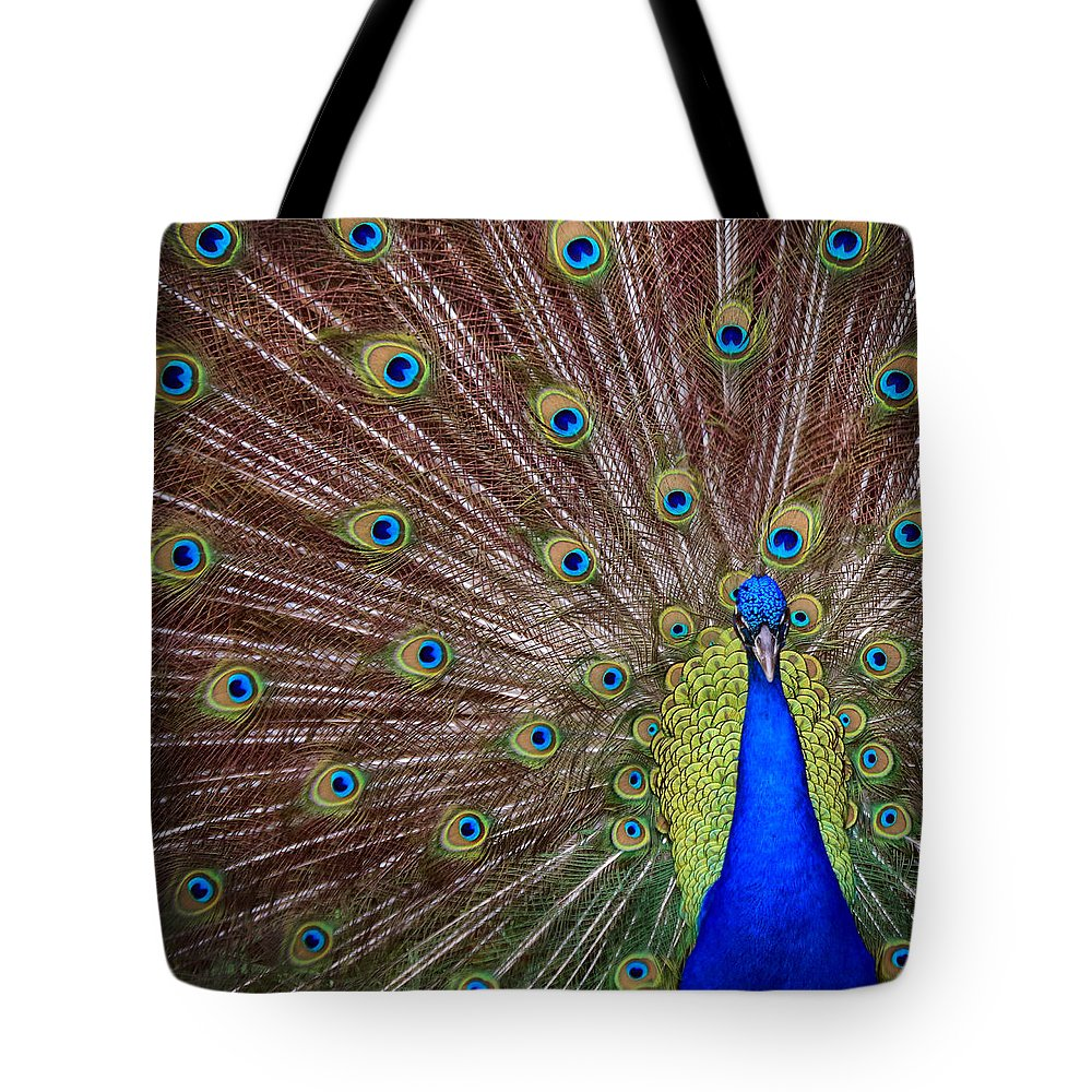Peacock Tote Bag featuring the photograph Peacock Squared by Jaki Miller
