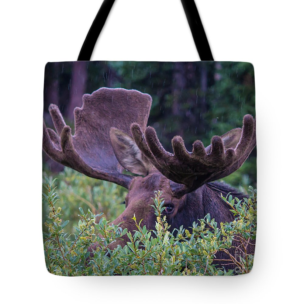Moose Tote Bag featuring the photograph Peek-a-boo Moose by Mary Giordano