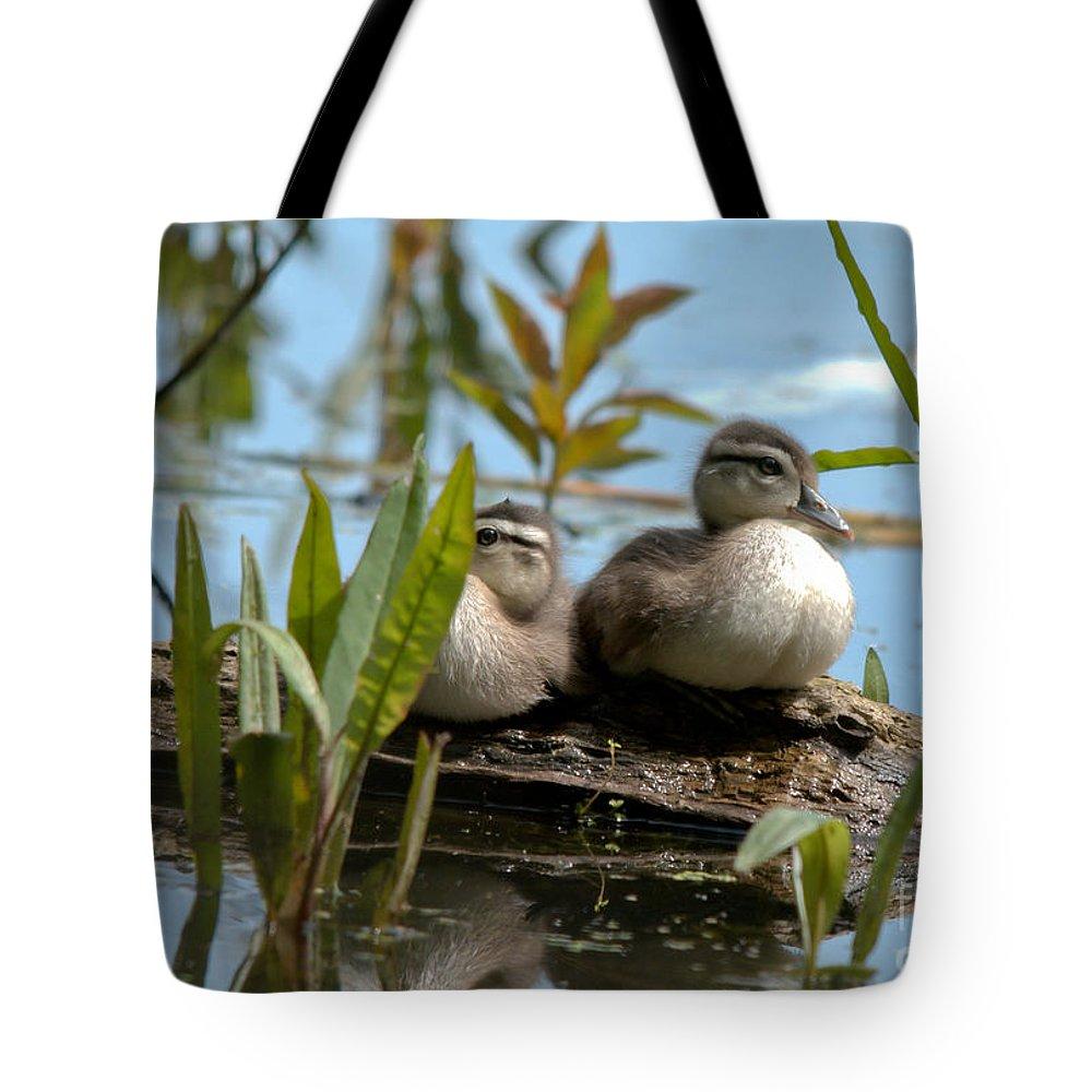 Wood Ducks Tote Bag featuring the photograph Peeking Ducks by Cheryl Baxter