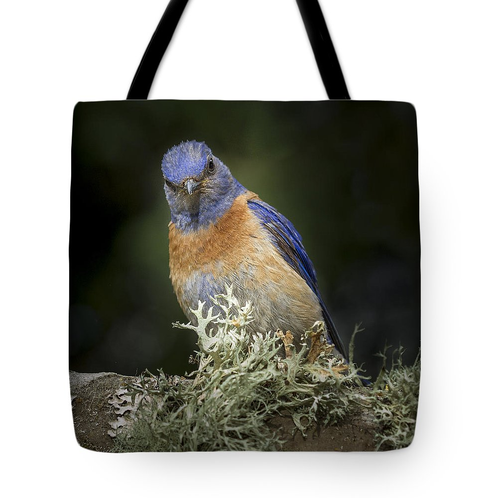 Animals Tote Bag featuring the photograph Peering by Jean Noren