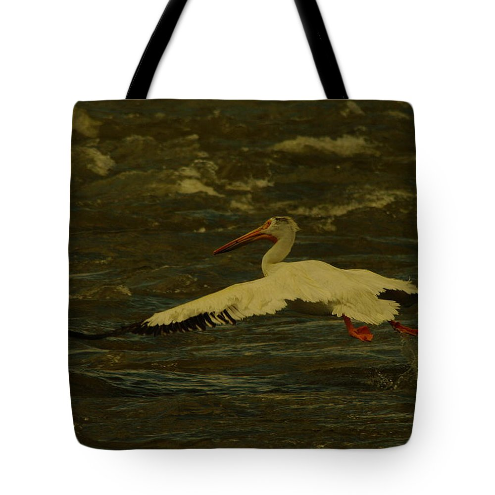 Pelicans Tote Bag featuring the photograph Pelican Flying Low by Jeff Swan