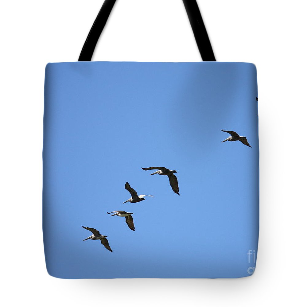 Pelicans Tote Bag featuring the photograph Pelicans All In A Row by Carol Groenen