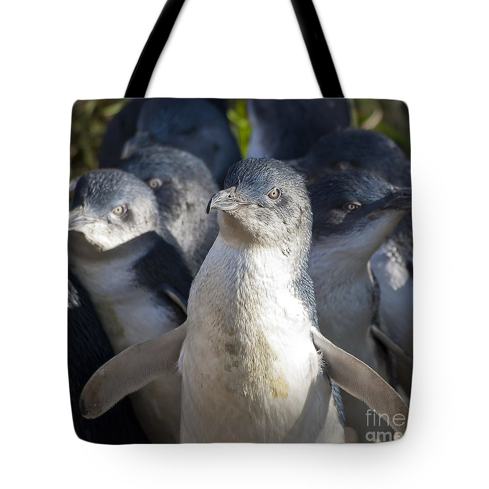 Birds Tote Bag featuring the photograph Penguins by Steven Ralser