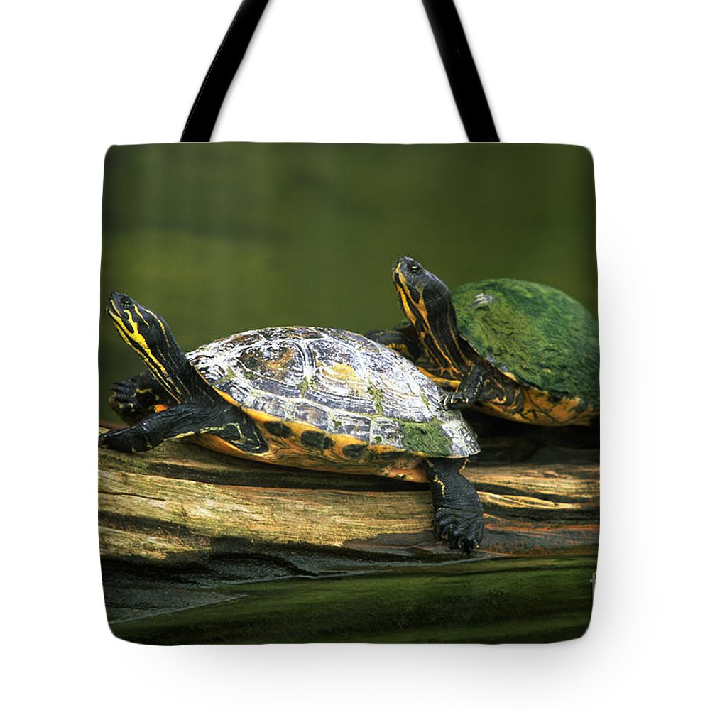 Peninsula Cooter Turtles Tote Bag featuring the photograph Peninsula Cooter Turtles by David N. Davis
