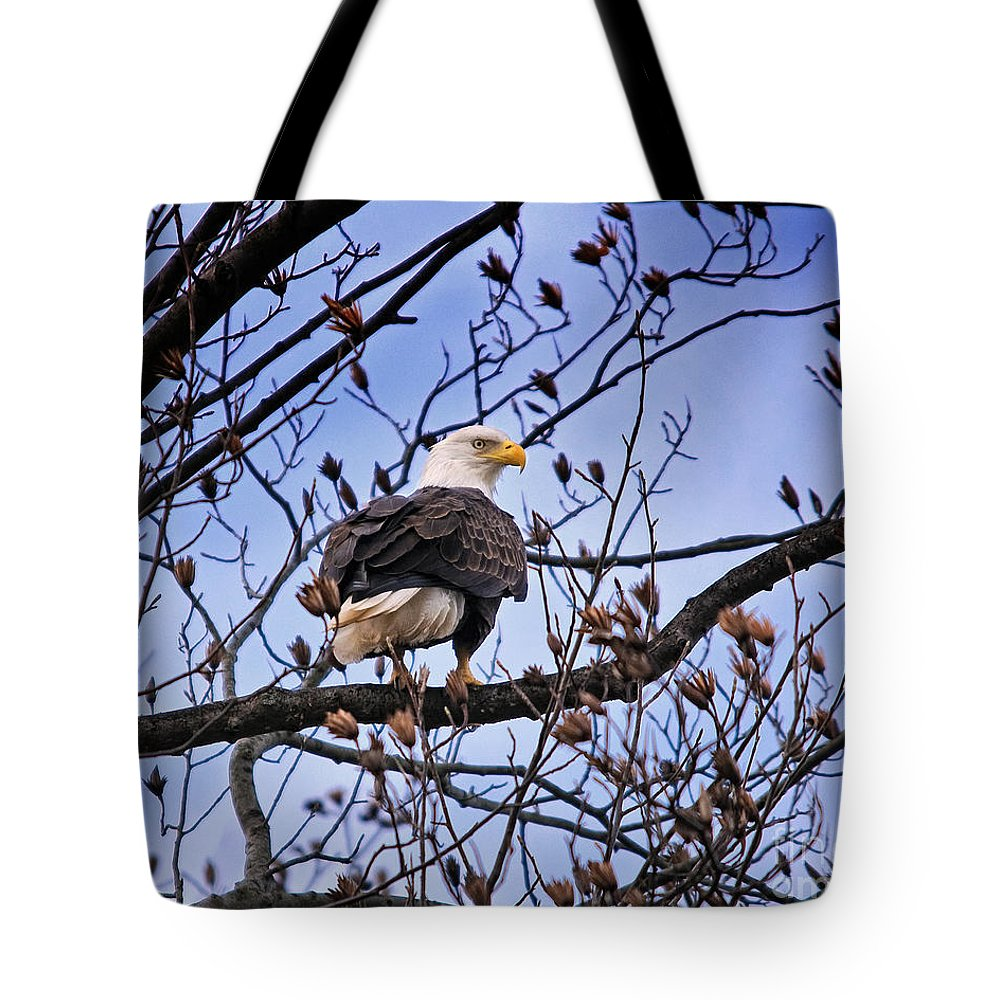 Eagle Tote Bag featuring the photograph Perched Bald Eagle by Timothy Flanigan