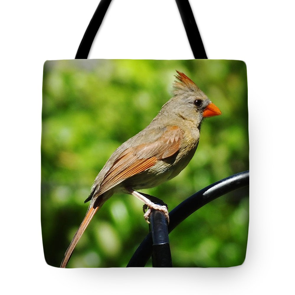 Female Cardinal Tote Bag featuring the photograph Perched Cardinal by Lizi Beard-Ward