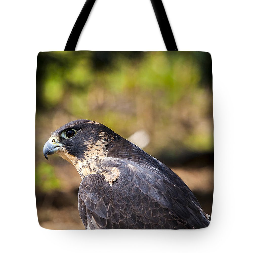 Aerial Tote Bag featuring the photograph Peregrine Falcon by Jack R Perry