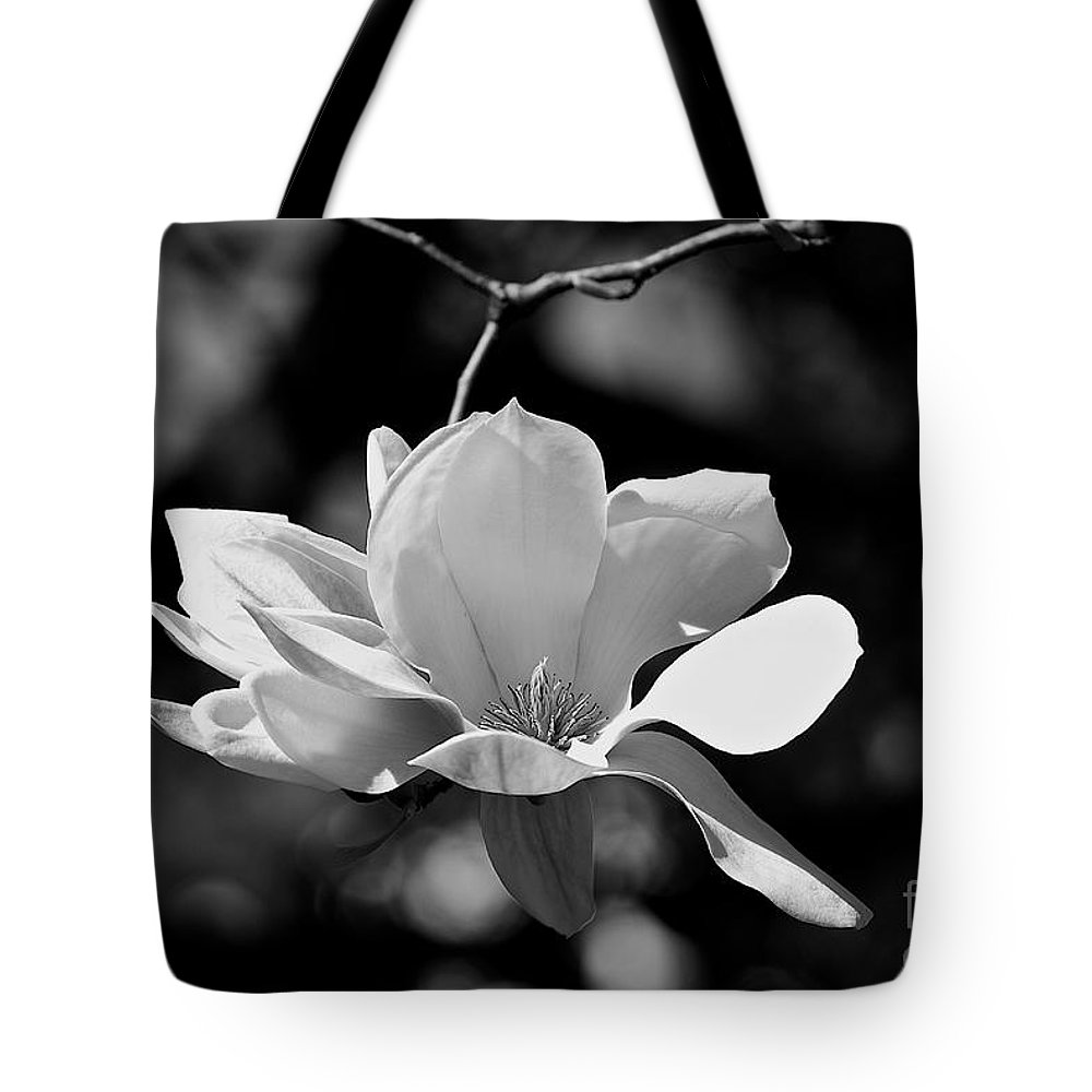 Black And White Tote Bag featuring the photograph Perfect Bloom Magnolia In White by Frank J Casella