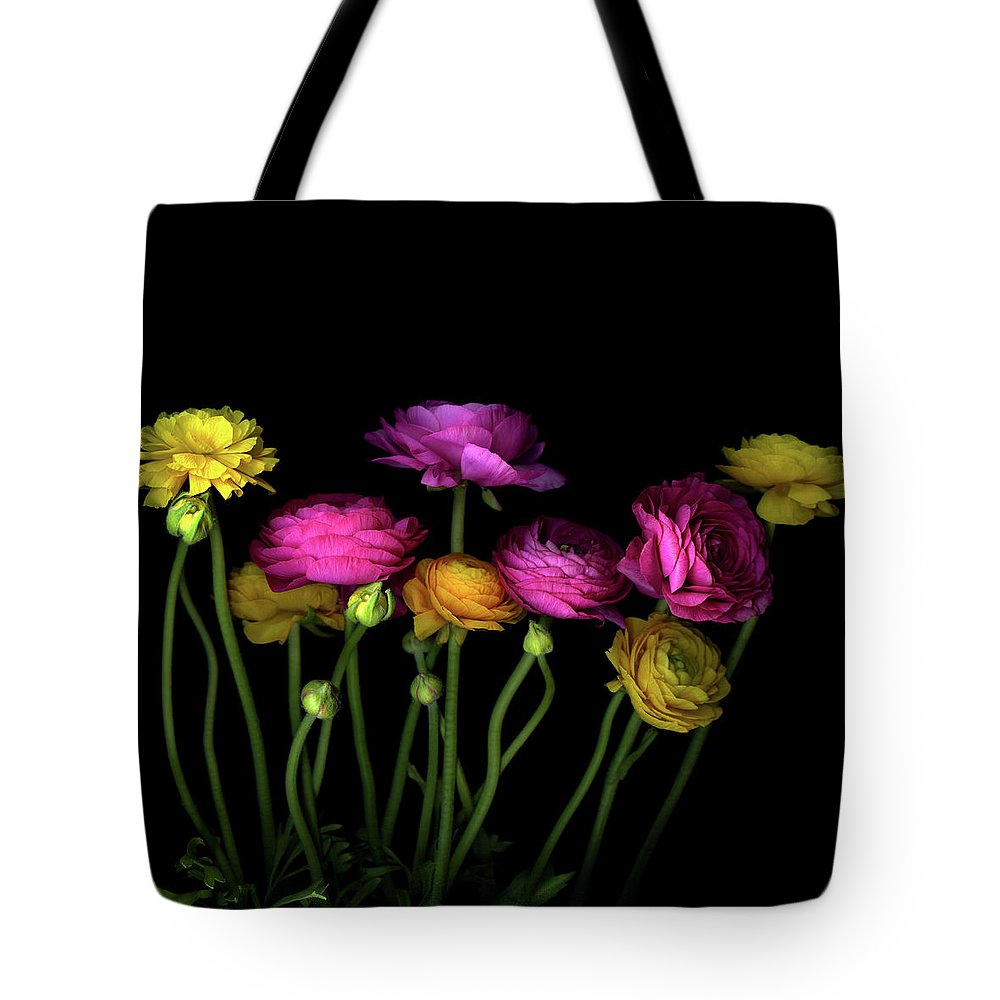 Black Background Tote Bag featuring the photograph Persian Buttercups Ranunculus Asiaticus by Photograph By Magda Indigo