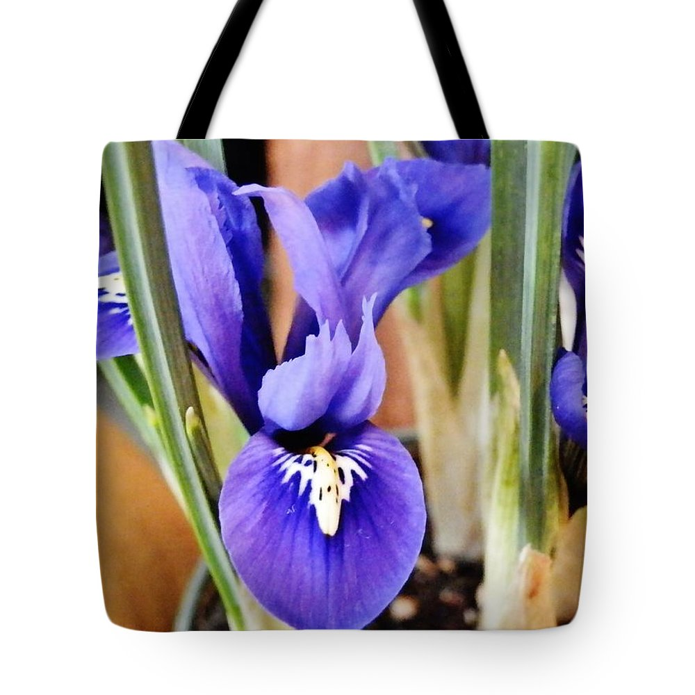 Flower Tote Bag featuring the photograph Petite Dutch Irises by VLee Watson