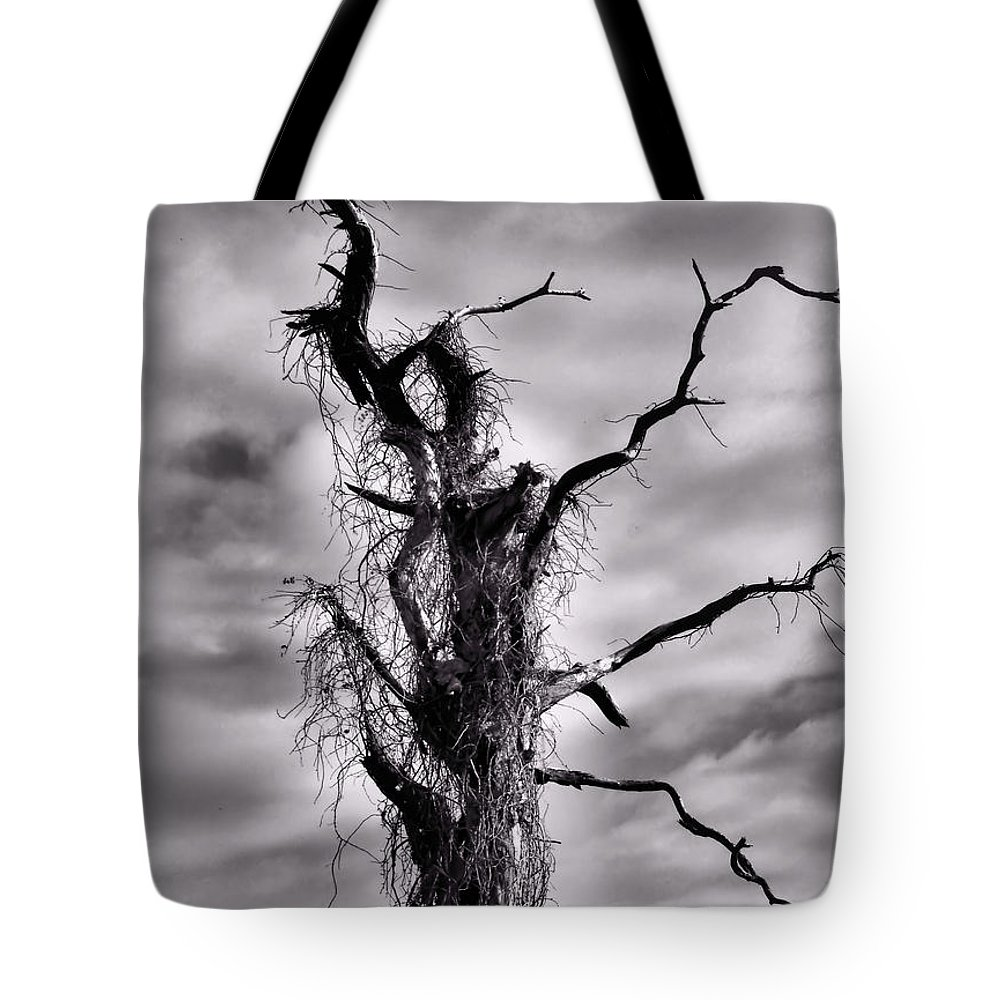 Tree Tote Bag featuring the photograph Petrified Tree by Rosalie Scanlon