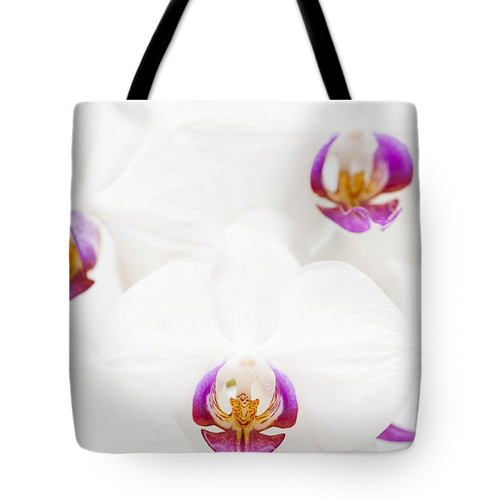 Phalaenopsis Tote Bag featuring the photograph Phalaenopsis by Anne Gilbert