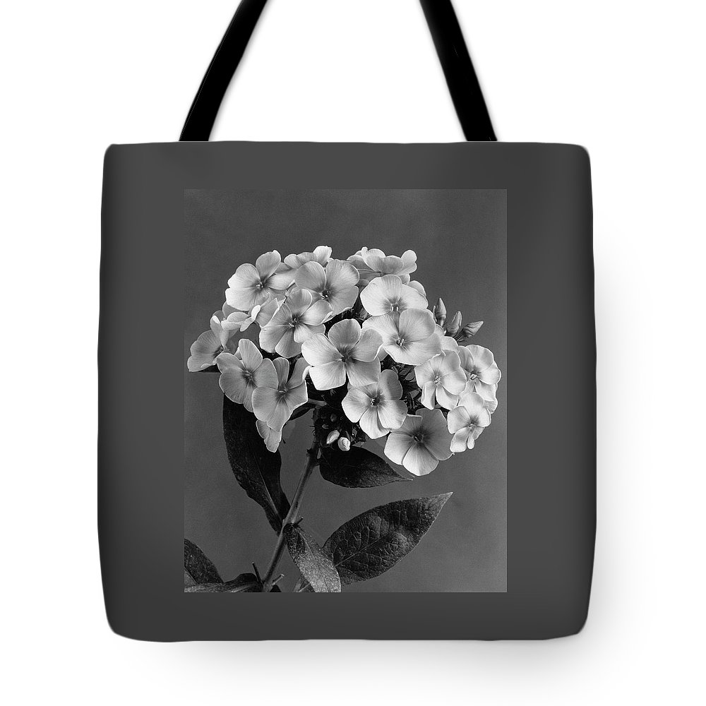 Flowers Tote Bag featuring the photograph Phlox Blossoms by J. Horace McFarland