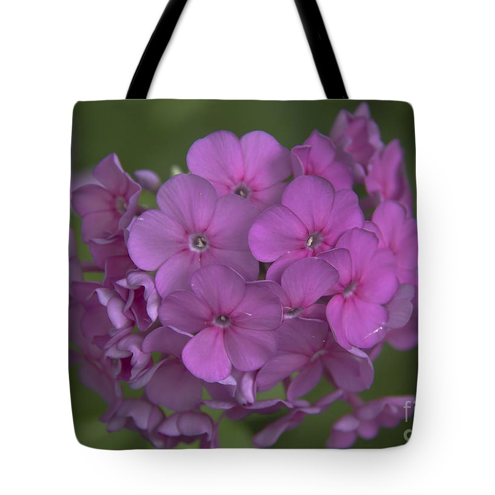 Phlox Tote Bag featuring the photograph Phlox Nicky by Teresa Mucha