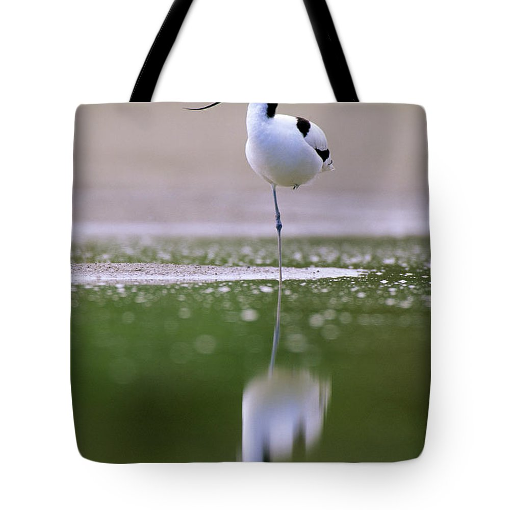 Fn Tote Bag featuring the photograph Pied Avocet Recurvirostra Avosetta by Danny Ellinger
